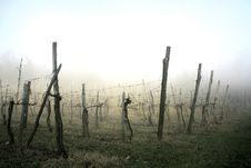 Free Fog Landscape Royalty Free Stock Photo - 2168545