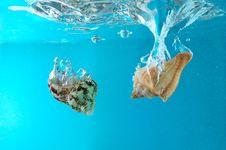 Free Seashells In Water Stock Image - 2169751