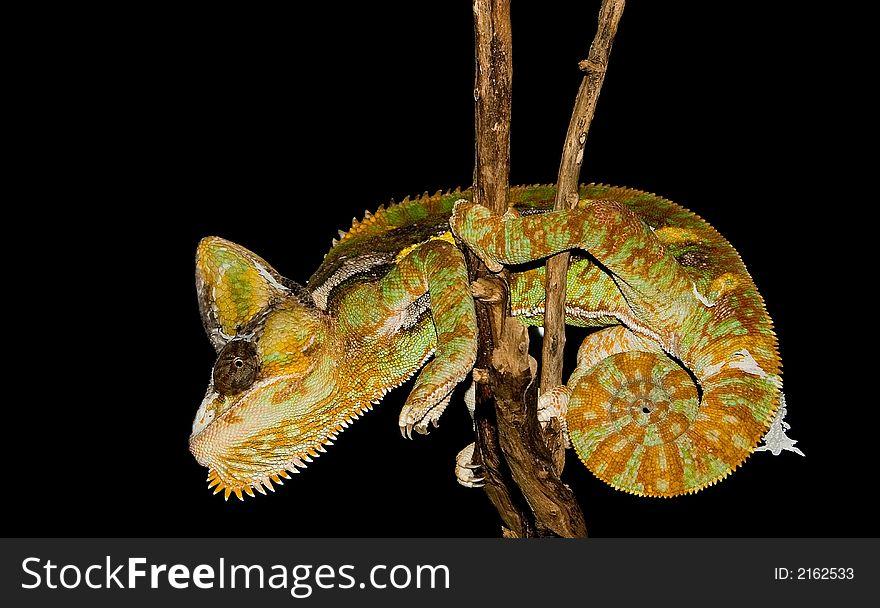Reptile on a stick