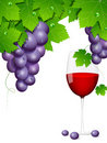Free Grapes Stock Photography - 21604892