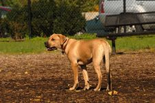 Free Puppy Royalty Free Stock Photo - 21600115
