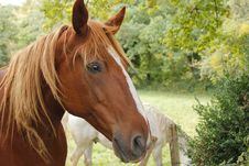 Free Profile Of Horse Stock Photography - 21600152
