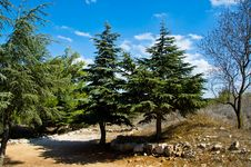 Free Tree Landscape Royalty Free Stock Photography - 21600217