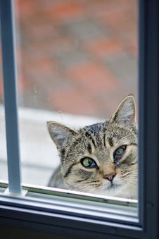 Free Cat With Wounded Eye Royalty Free Stock Images - 21600609