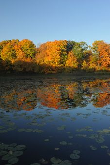 Free Autumn Reflection On Still Pond Royalty Free Stock Photos - 21601348