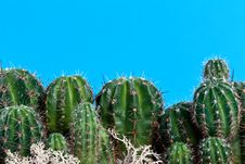 Free Cactus With Needles Stock Photography - 21603152