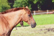 Free Sad Horse Royalty Free Stock Photos - 21603368