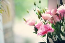 Free Gentle Bouquet Royalty Free Stock Photos - 21604108