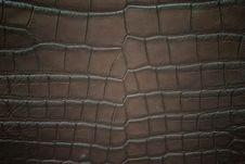 Free Freshwater Crocodile Belly Skin Textureใ Stock Photo - 21607090
