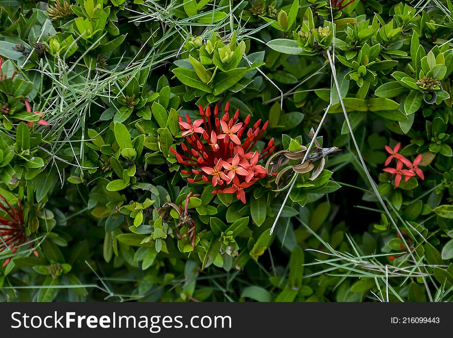 Red Santan Plant gren backround