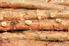 Free Pine Logs Royalty Free Stock Image - 21610436