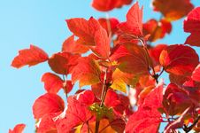 Free Autumn Leaves With Sun Rays Stock Images - 21611414