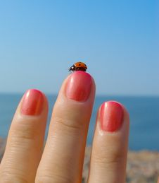 Free Ladybird On Her Finger With A Manicure Royalty Free Stock Images - 21613289