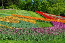Free Decorated Lawn With Multicolored Tulips Stock Photos - 21615283