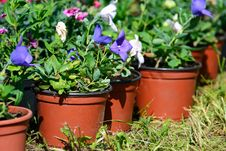 Free Flowerpots With Petunia In A Row Stock Photo - 21615350