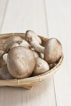 Free Fresh Mushrooms Stock Images - 21615684