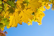 Free Autumn Yellow Leaves Stock Photography - 21616812