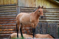 Horse And Wooden Barn Stock Photography