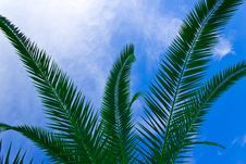 Free Tropical Sheets Stock Photos - 21619503