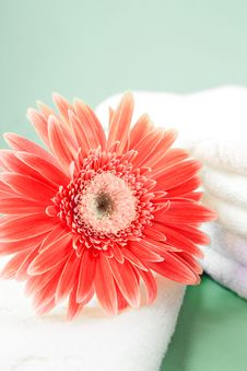 Free Flower And Towel Royalty Free Stock Photography - 21623387