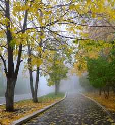 Free Fog In Autumn Park Royalty Free Stock Image - 21625966