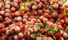 Free Cranberries Stock Image - 21626081