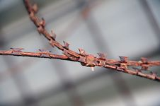 Free Rusty Barbed Wire Stock Images - 21629694