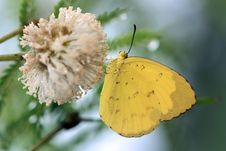 Free Butterfly Stock Image - 21631661