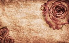 Free Textured Rose Stock Image - 21633131