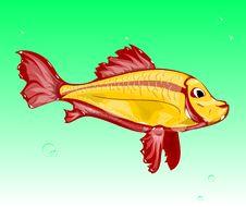 Free Fish Stock Image - 21633371