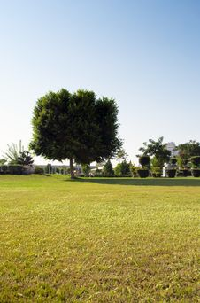 Free Tree In A Park Stock Photos - 21634633