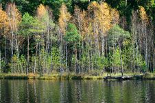 Free Forest In Autumn Royalty Free Stock Photography - 21634867