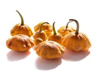 Free Bush Pumpkins Stock Photo - 21635080