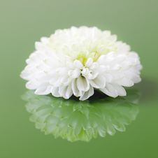 Free Flower Stock Image - 21636561