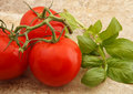 Free Tomatoes And Basil Stock Image - 21646111