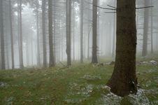 Free Pine - Wood Royalty Free Stock Image - 21641406