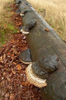Free Mushrooms On Trunk Stock Photo - 21641420