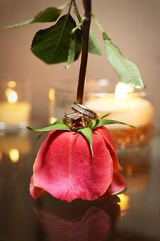 Bride And Grooms Rings On Red Rose Non-traditional Stock Photo