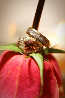 Bride And Grooms Rings On Red Rose Non-traditional Stock Photography
