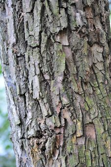 Free Bark Stock Photos - 21646453