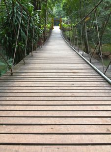 Rope Walkway Through The Treetops Stock Photography