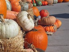 Fresh Pumpkins, Gourds And Squash Royalty Free Stock Photography