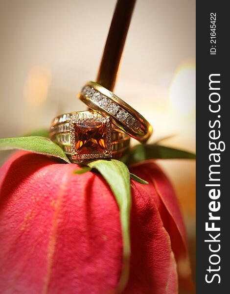 Bride and Grooms rings on red rose non-traditional