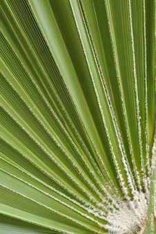 Free Fan Palm Stock Photos - 21655273