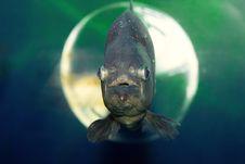 Free Fish Stock Photography - 21657442