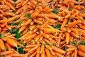 Free Winter Carrots Stock Photos - 21661693