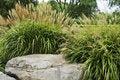 Free Autumn Grass Stock Photo - 21666760