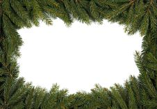 Free Spruce Background Royalty Free Stock Photos - 21663338