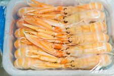 Free Defrosting Langoustines Royalty Free Stock Photo - 21663995