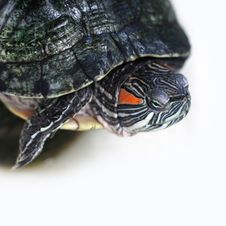 Free Turtle Stock Photography - 21668502